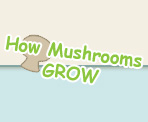How Mushrooms Grow